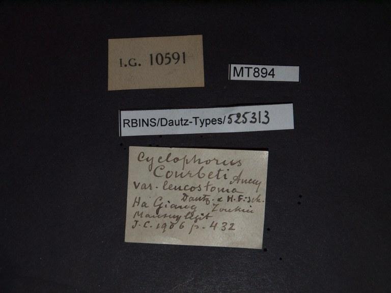 BE-RBINS-INV PARATYPE MT 894/1 Cyclophorus courbeti var. leucostoma LABELS.jpg