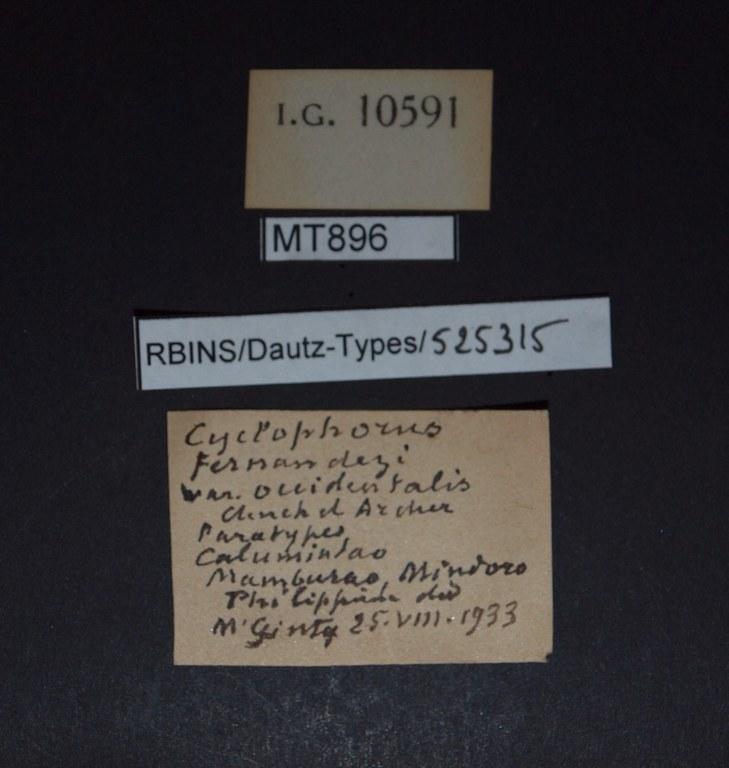 BE-RBINS-INV PARATYPE MT 896 Cyclophorus fernandezi var. occidentalis LABELS.jpg