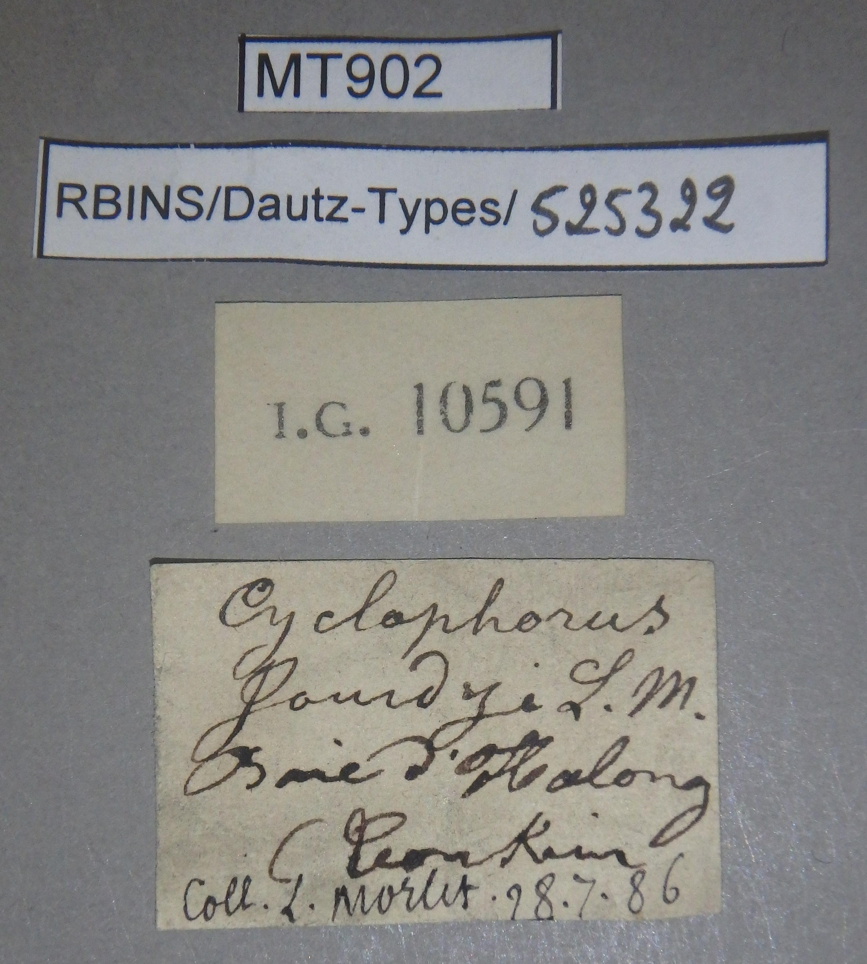 BE-RBINS-INV MT 902 Cyclophorus (Glossostylus) jourdyi pt Lb.jpg
