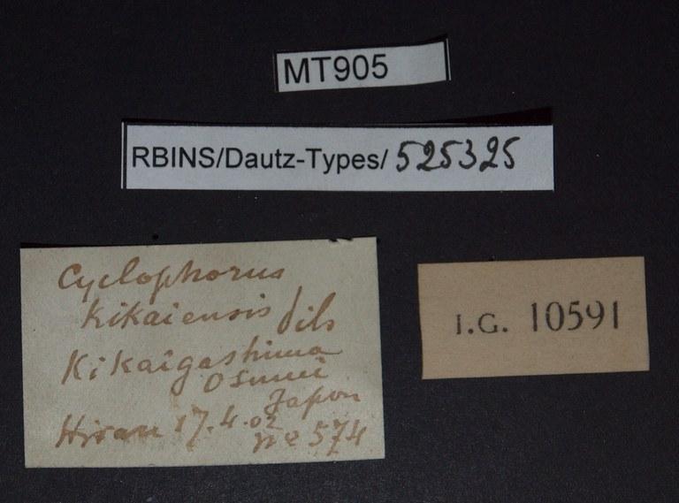 BE-RBINS-INV PARATYPE MT 905 Cyclophorus kikaiensis LABELS.jpg