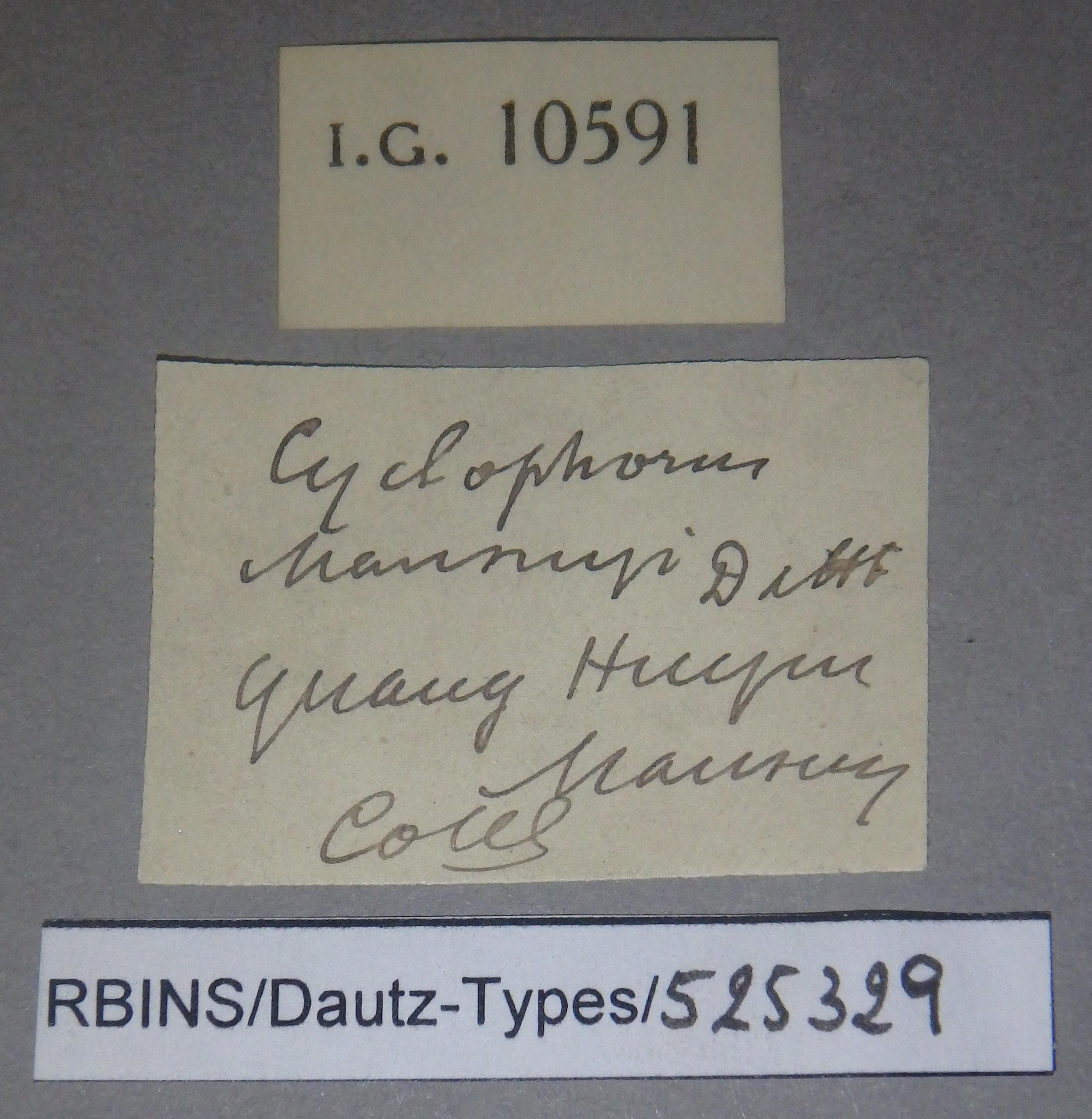 BE-RBINS-INV PARATYPE MT 908 Cyclophorus mansuyi LABELS.jpg