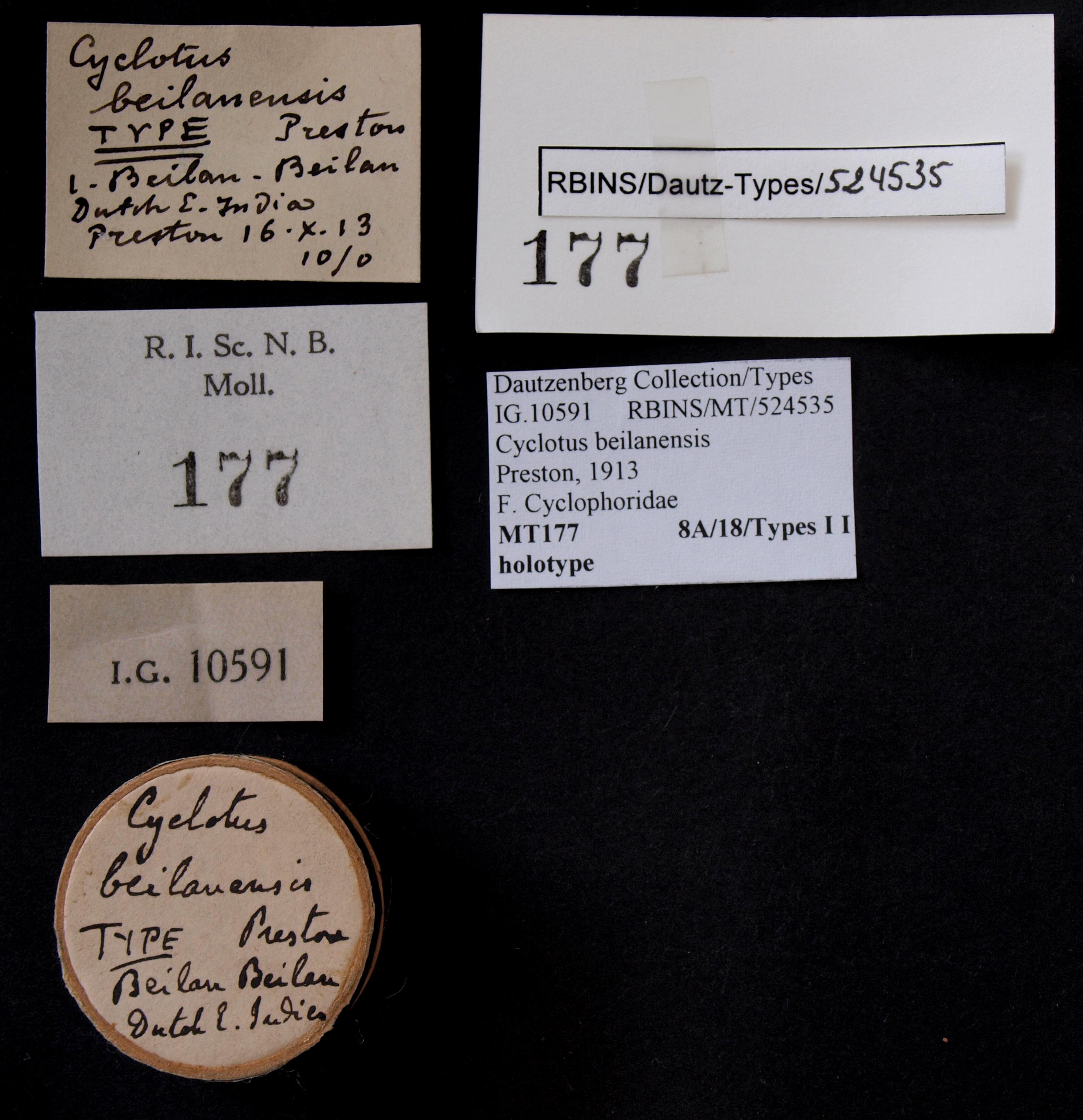 BE-RBINS-INV HOLOTYPE MT 177 Cyclotus beilanensis LABELS.jpg