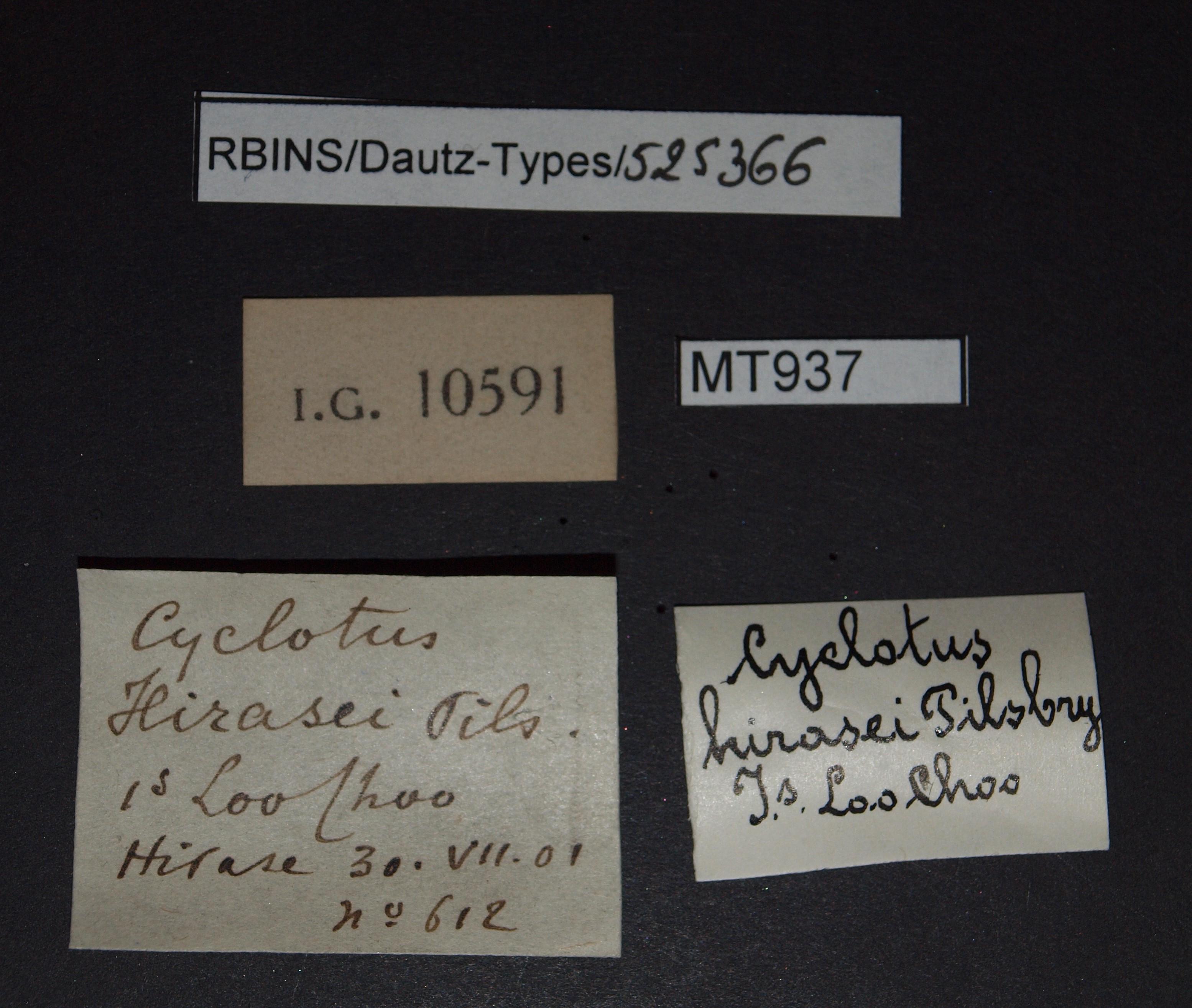 BE-RBINS-INV PARATYPE MT 937 Cyclotus hirasei LABELS.jpg