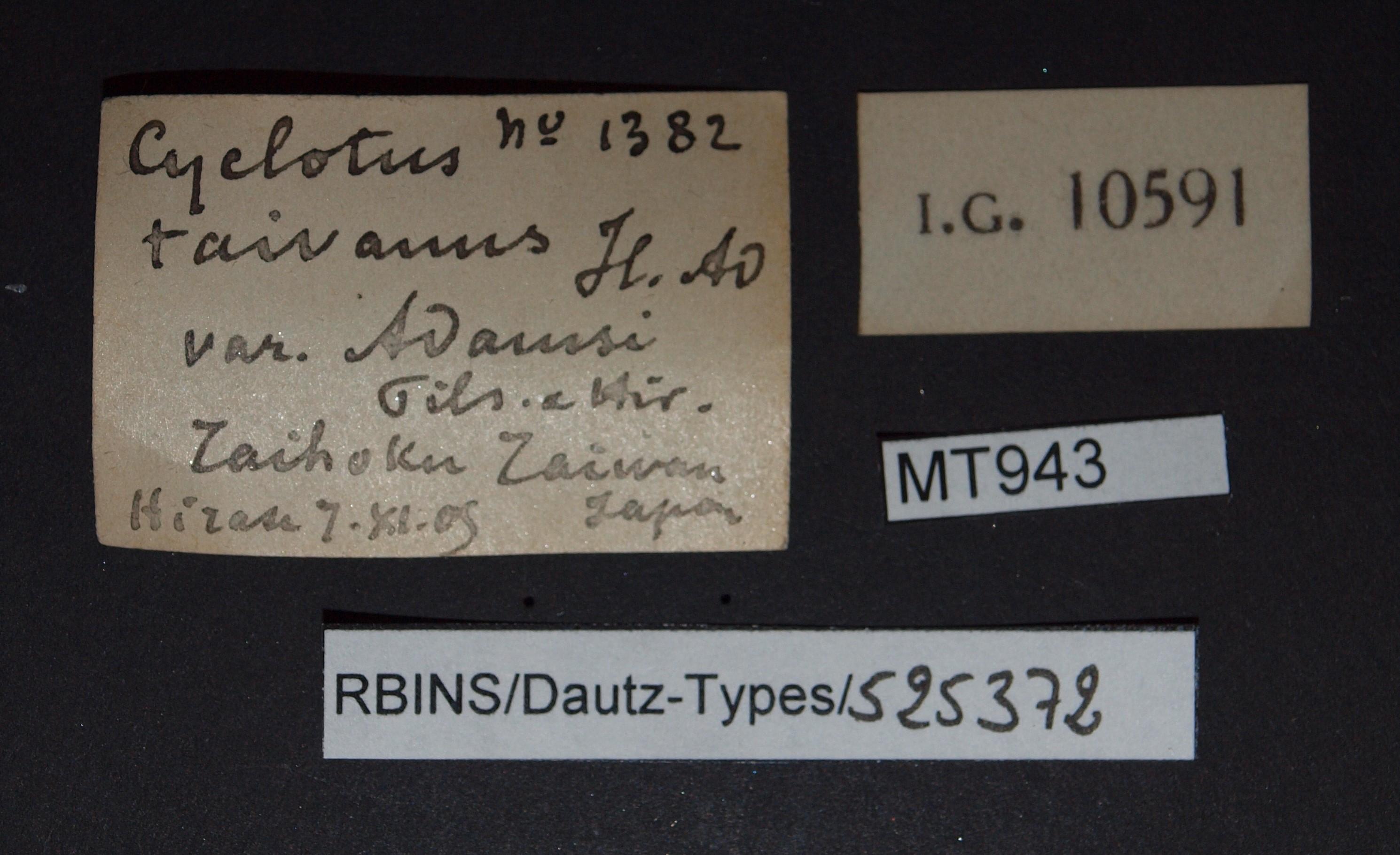 BE-RBINS-INV MT 943 Cyclotus taivanus var. adamsi pt Lb.jpg