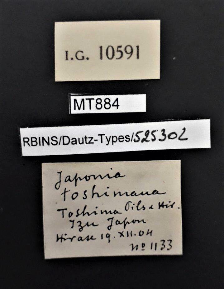 BE-RBINS-INV MT 884 Japonia toshimana  pt Lb.jpg