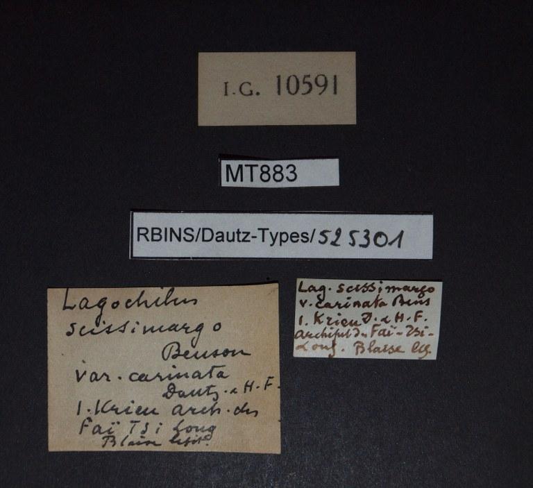 BE-RBINS-INV PARATYPE MT 883 Lagochilus scissimargo var. carinata LABELS.jpg