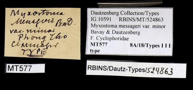 BE-RBINS-INV TYPE MT 577 Myxostoma messageri var. minor LABELS.jpg