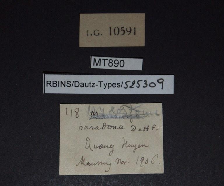BE-RBINS-INV PARATYPE MT 890 Myxostoma paradoxa LABELS.jpg