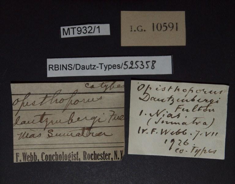 BE-RBINS-INV PARATYPE MT.932/1 Opisthoporus dautzenbergi LABELS.jpg