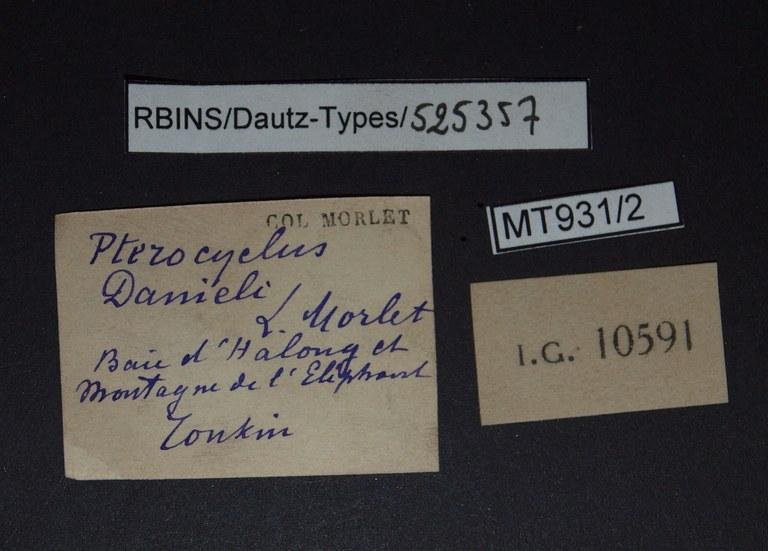 BE-RBINS-INV PARATYPE MT.931/2 Pterocyclus danieili LABELS.jpg