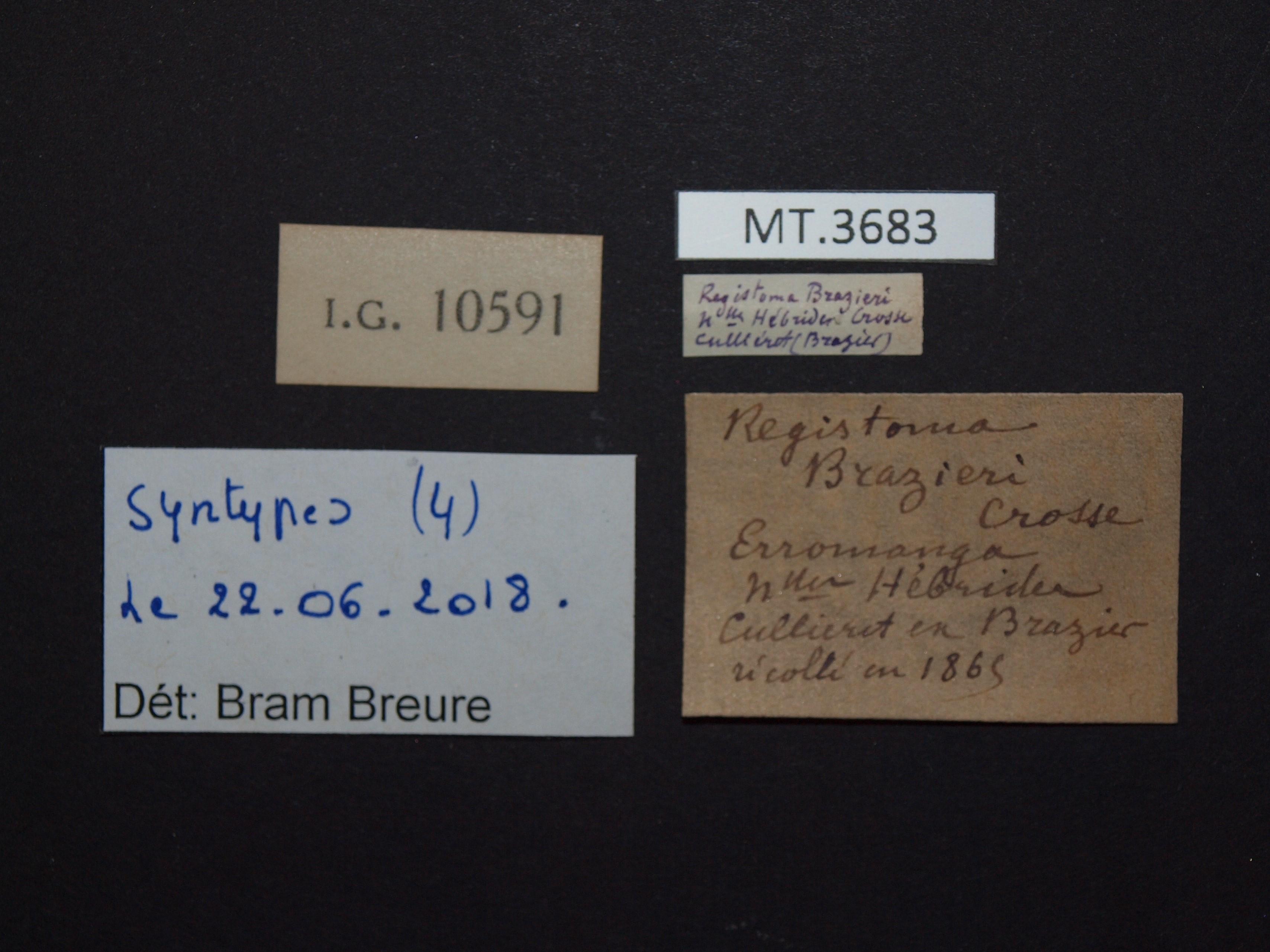 BE-RBINS-INV MT.3683 Registoma brazieri st Lb.jpg