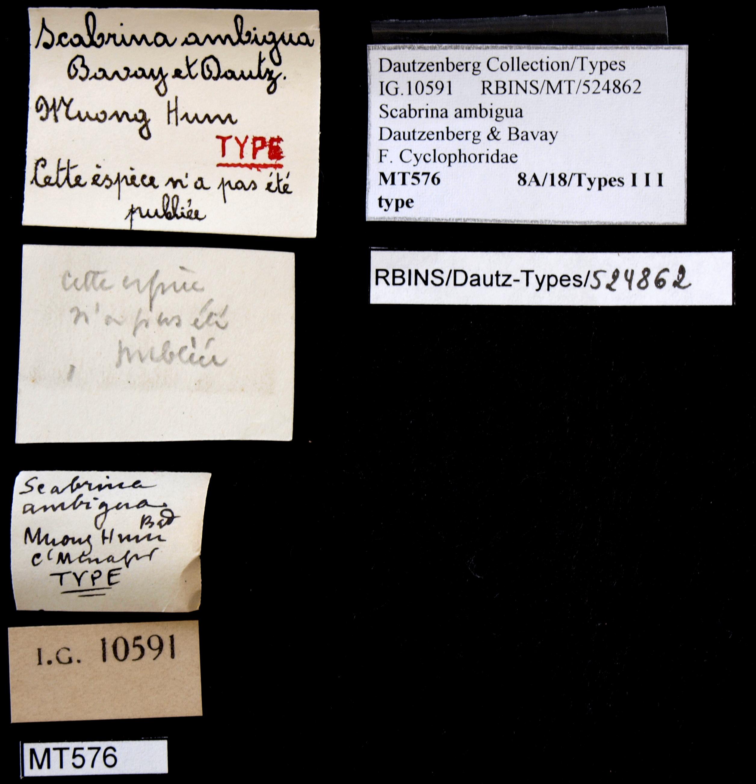 0576 Scabrina ambigua Typ Lb.JPG