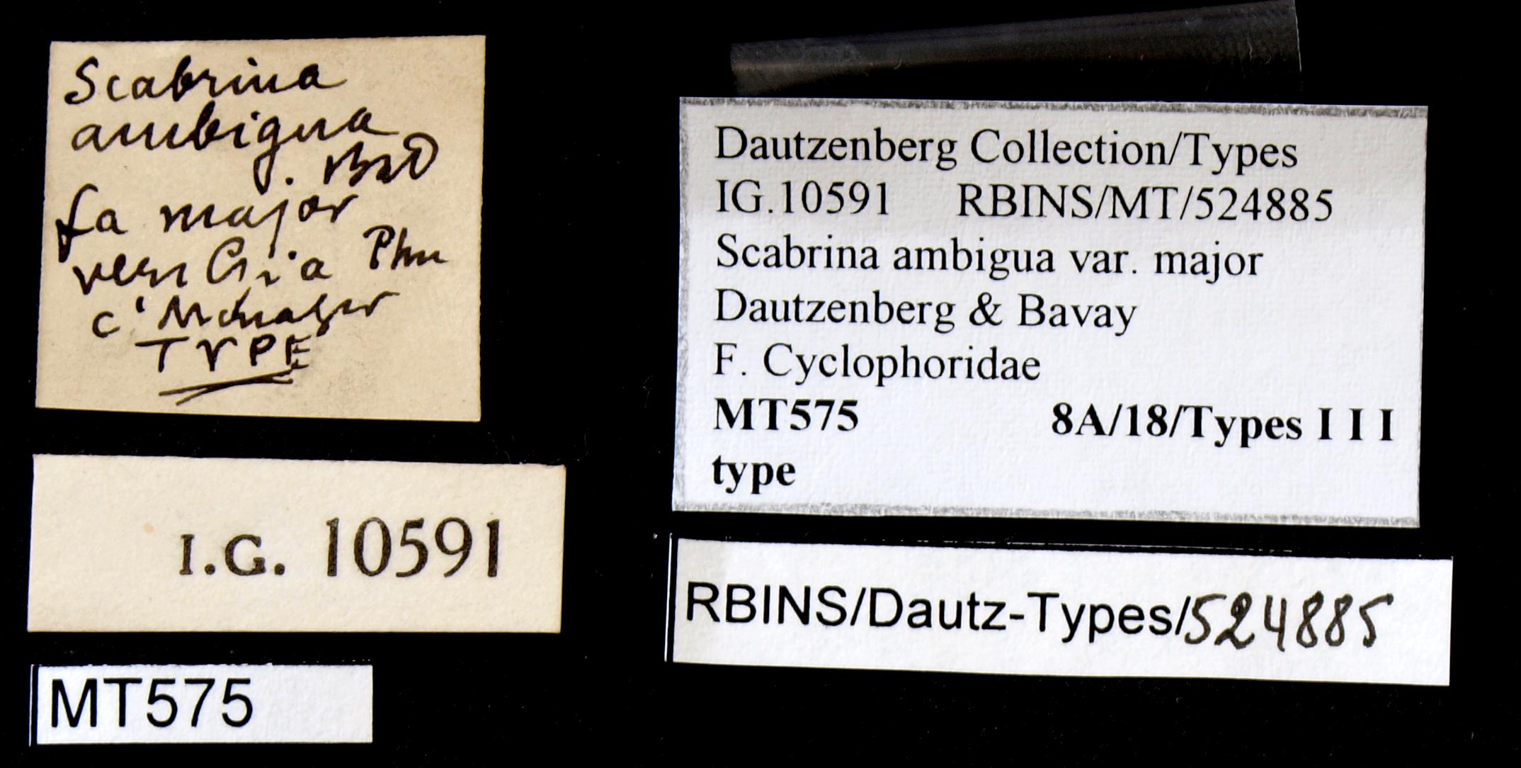 BE-RBINS-INV TYPE MT 575 Scabrina ambigua var. major LABELS.jpg