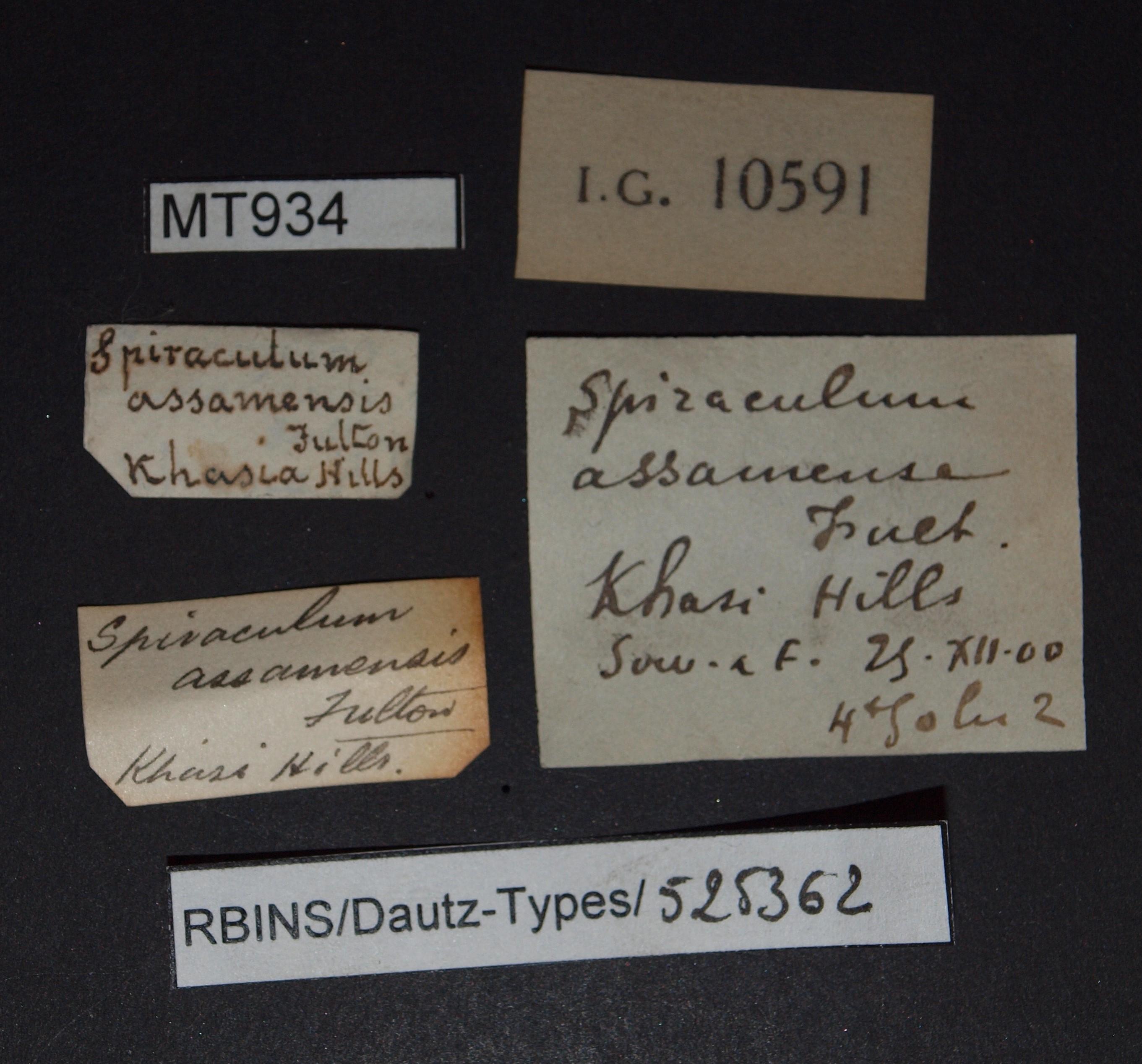 Spiraculum assemense pt.JPG