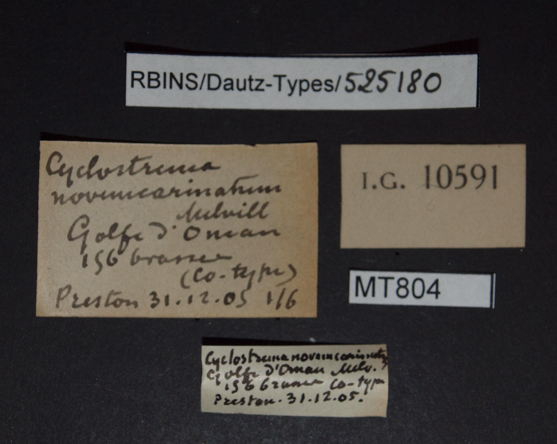 Cyclostrema novemcarinatum pt (ct).JPG