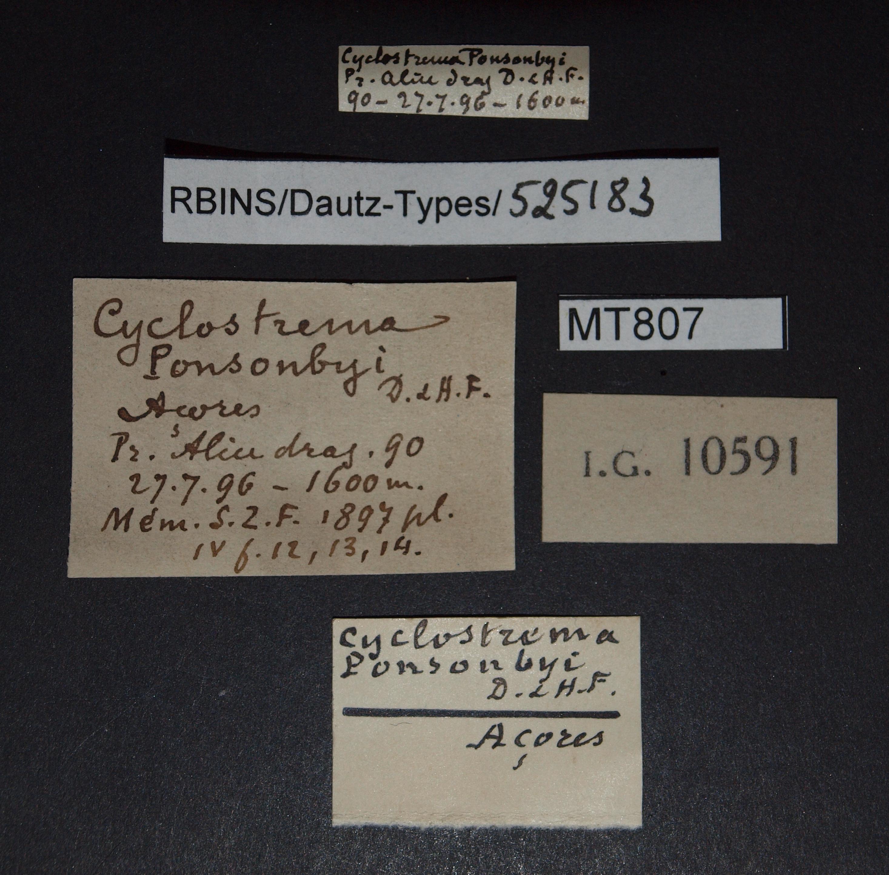 BE-RBINS-INV MT 807 Cyclostrema ponsonbyi pt. Lb.jpg