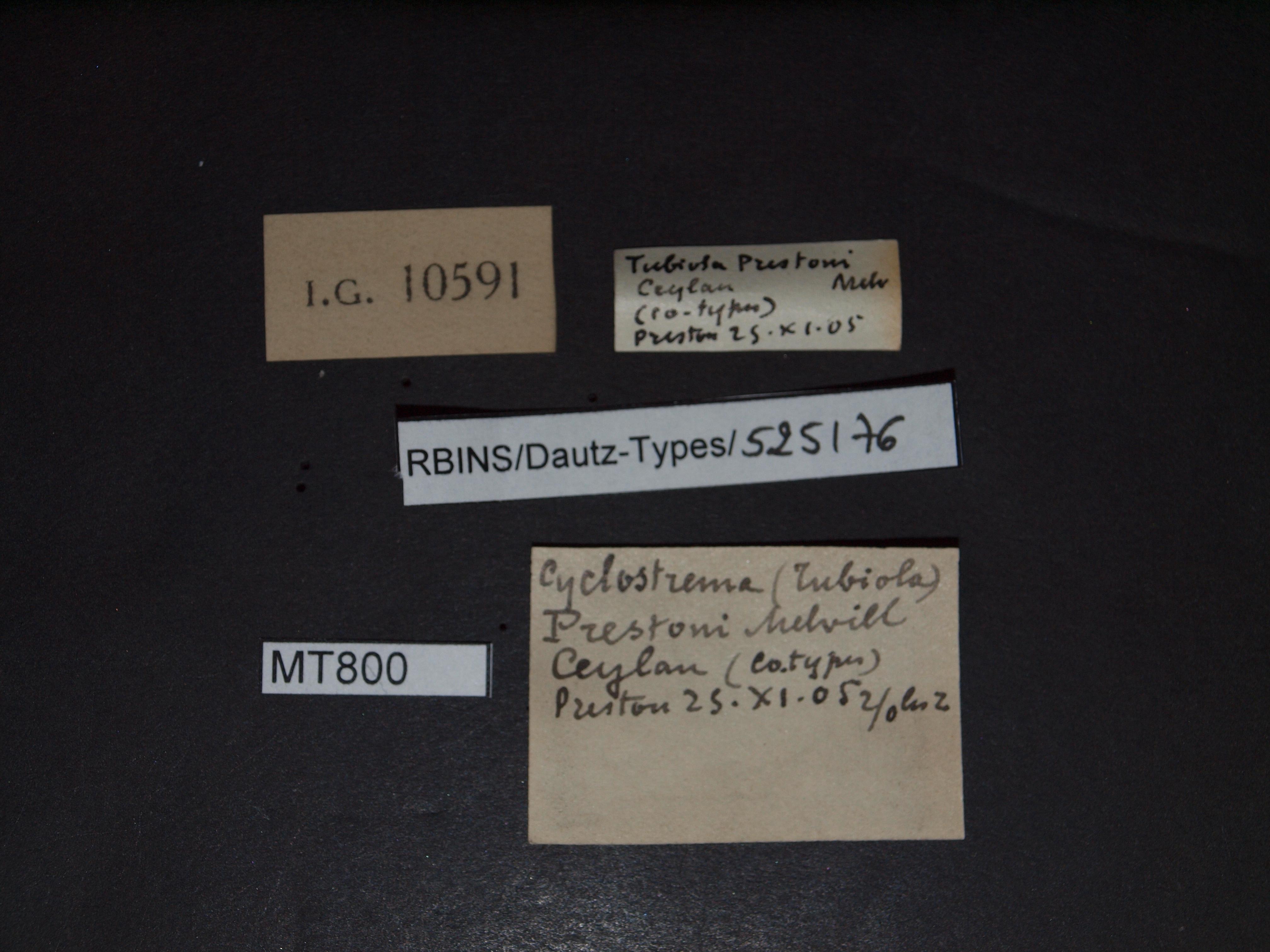 BE-RBINS-INV PARATYPE MT 800 Cyclostrema (Tubiola) prestoni LABELS.jpg