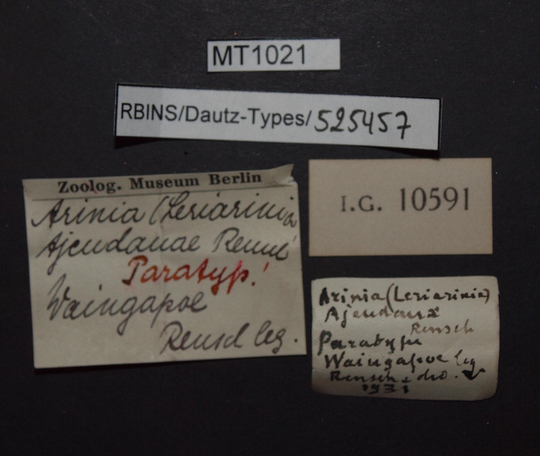 BE-RBINS-INV PATATYPE MT 1021 Arinia (Leucarinia) tjendanae LABELS.jpg