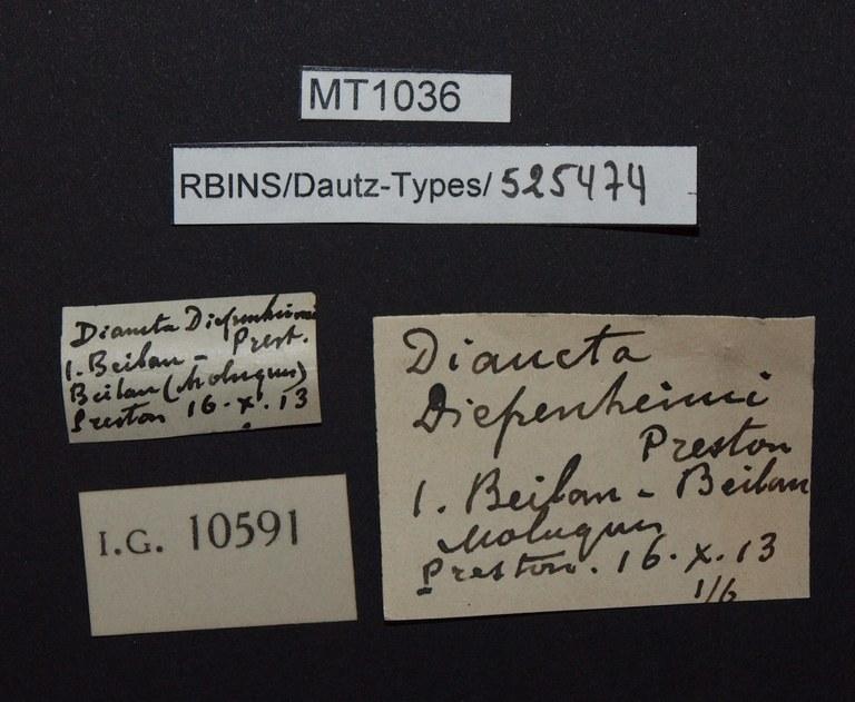 BE-RBINS-INV PARATYPE MT 1036 Diana diepenheimi labels.jpg