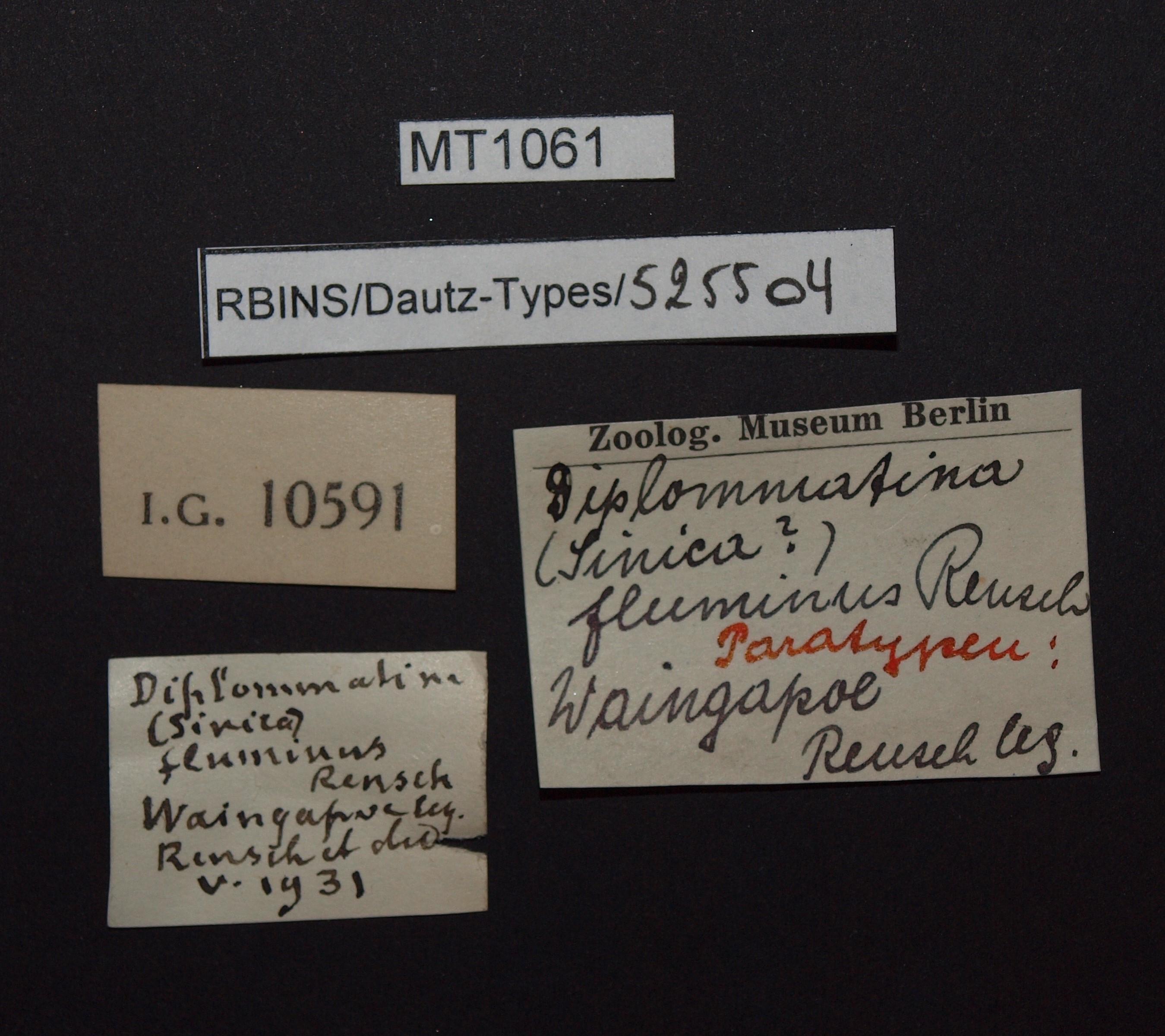 BE-RBINS-INV PARATYPE MT 1061 Diplommatina (Sinica) fluminus LABELS.jpg