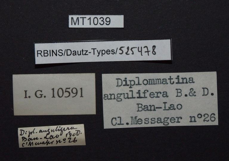 BE-RBINS-INV PARATYPE MT 1039 Diplommatina angulifera angulifera LABELS.jpg