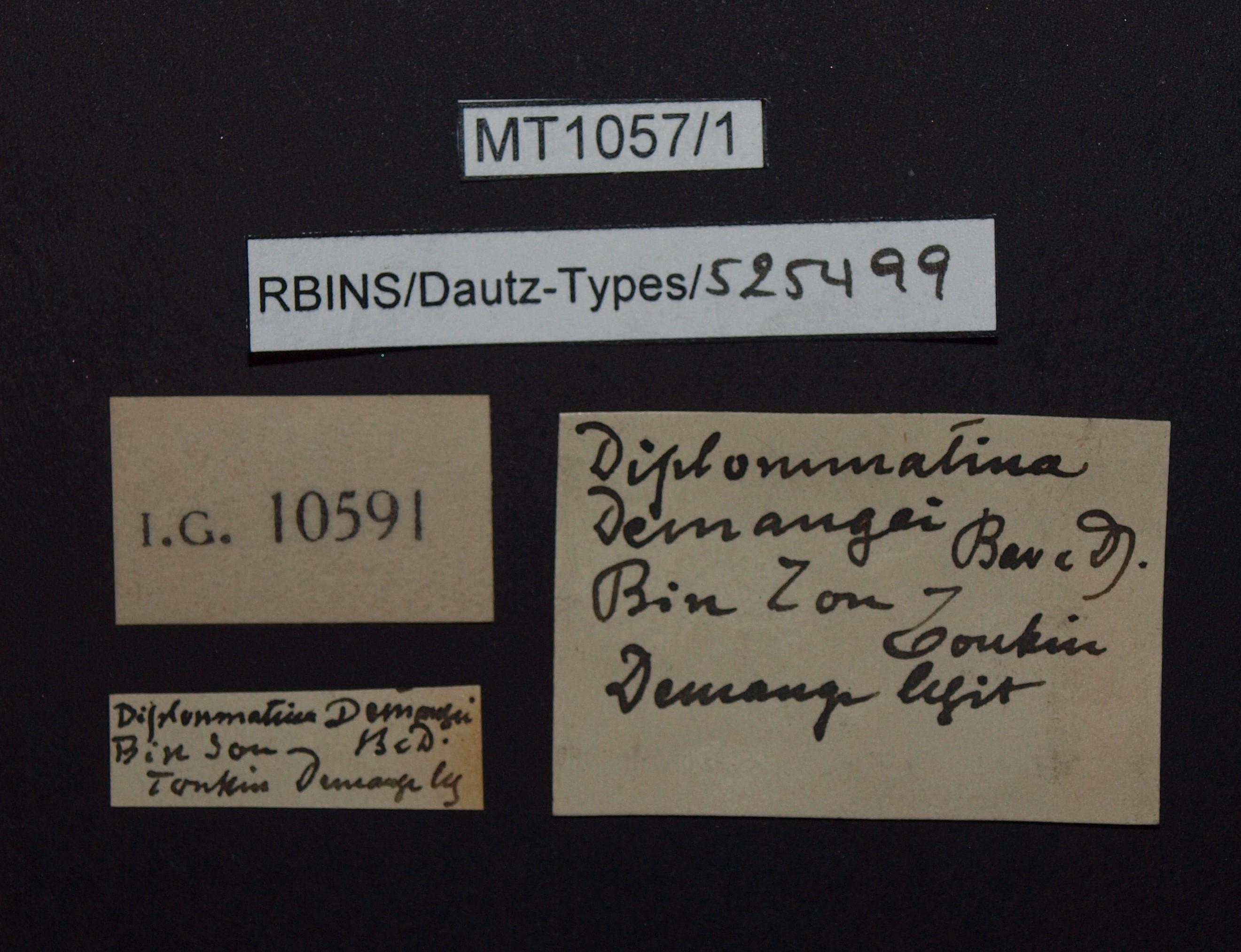 BE-RBINS-INV PARATYPE MT.1057/1 Diplommatina demangei LABELS.jpg