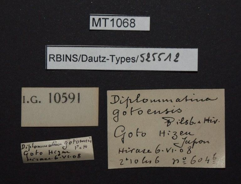 BE-RBINS-INV PARATYPE MT 1068 Diplommatina (Sinica) gotoensis LABELS.jpg