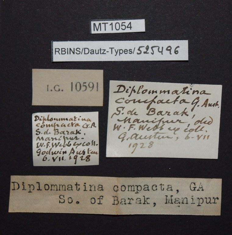 BE-RBINS-INV PARATYPE MT 1054 Diplommatina (Metadiancta) compacta LABELS.jpg