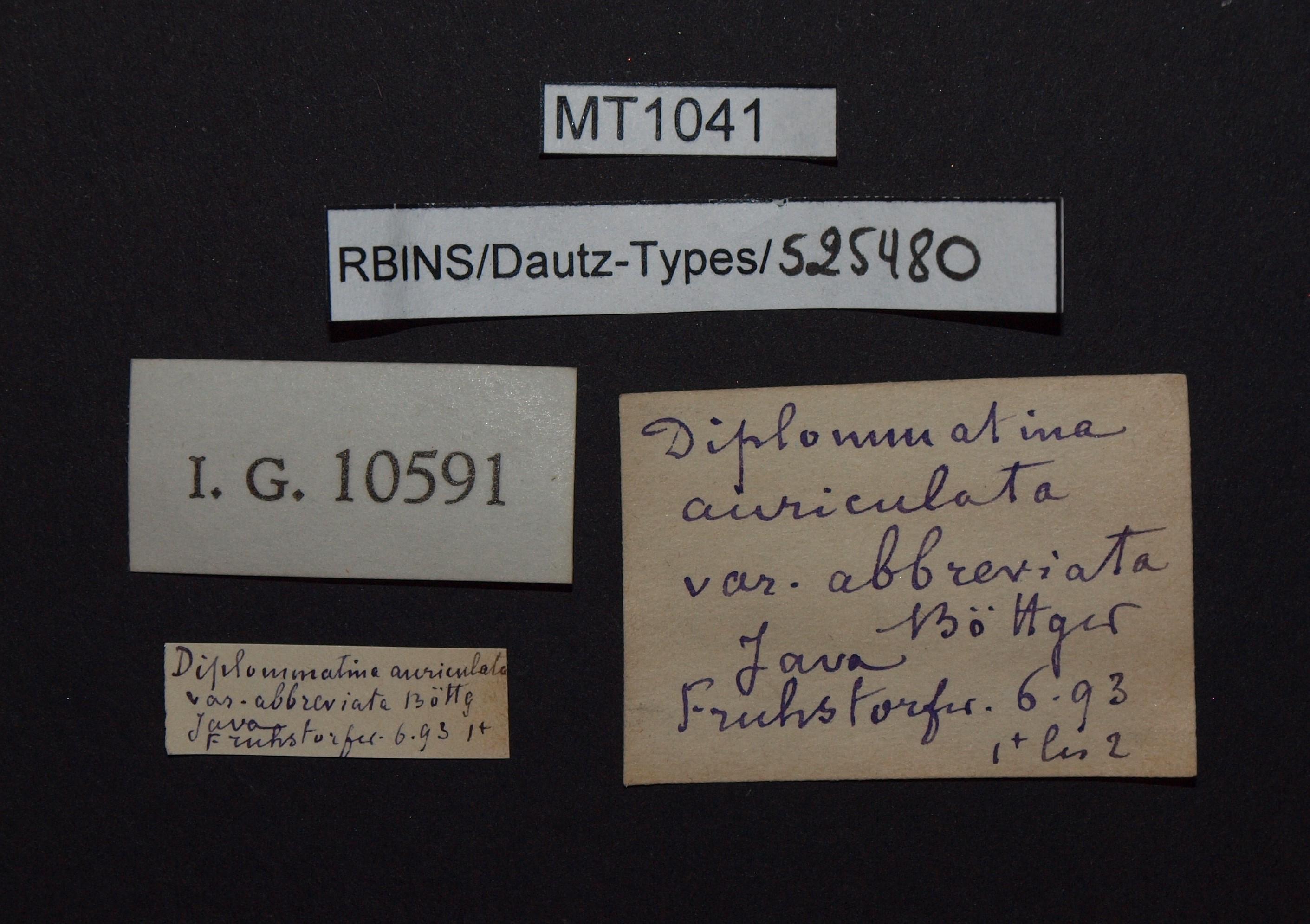 BE-RBINS-INV PARATYPE MT 1041 Diplommatina (Sinica) auriculata var. abbreviata LABELS.jpg