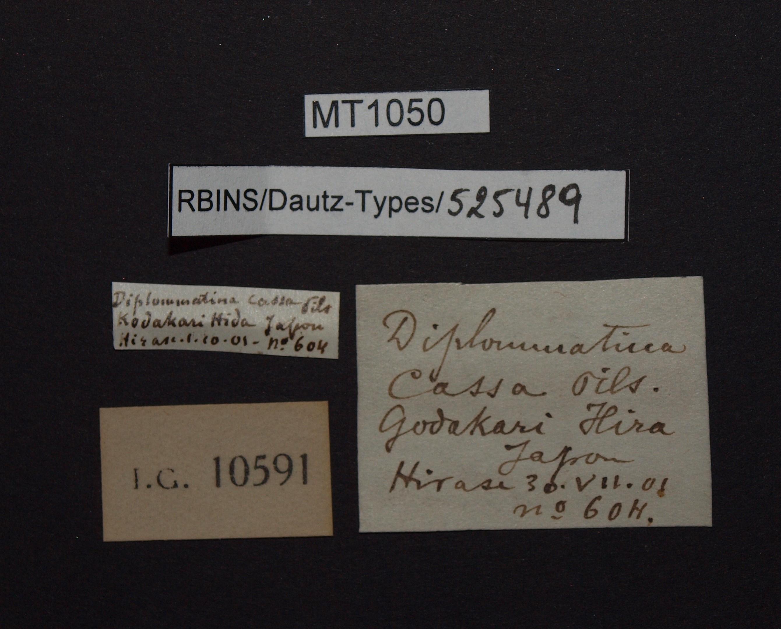 BE-RBINS-INV MT 1050 Diplommatina (Sinica) cassa pt Lb.jpg