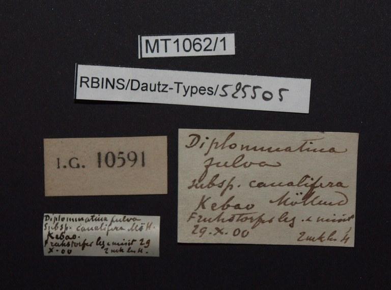 BE-RBINS-INV PARATYPE MT.1062/1 Diplommatina (Sinica) var. canalifera LABELS.jpg