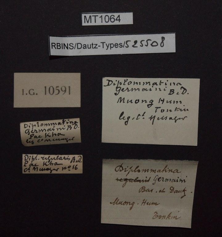 BE-RBINS-INV PARATYPE MT 1064 Diplommatina (Sinica) germaini LABELS.jpg
