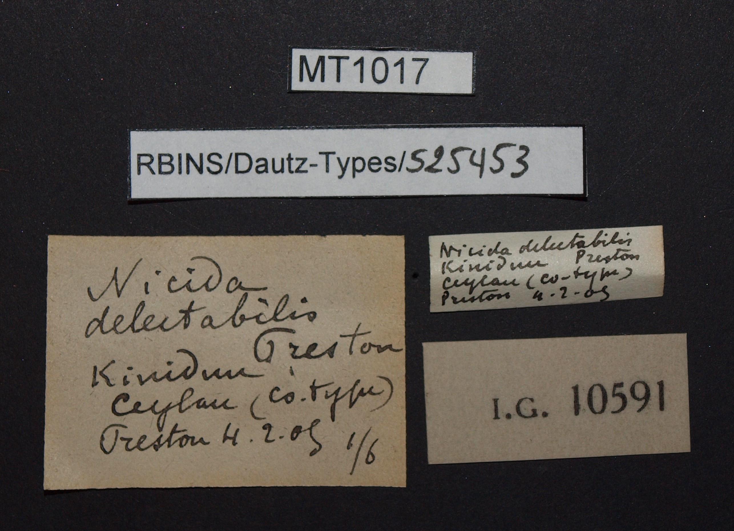 BE-RBINS-INV MT 1017 Nicida delectabilis pt Lb.jpg