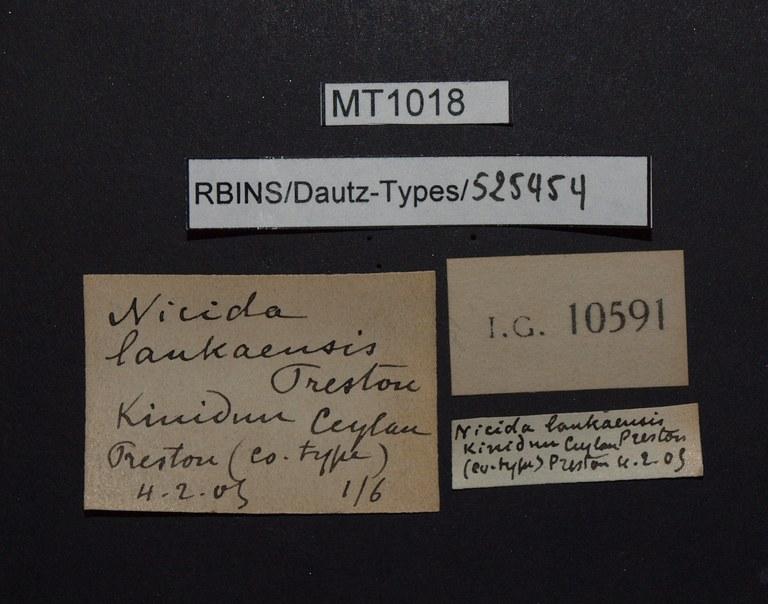 BE-RBINS-INV PARATYPE MT 1018 Nicida lankaensis LABELS.jpg
