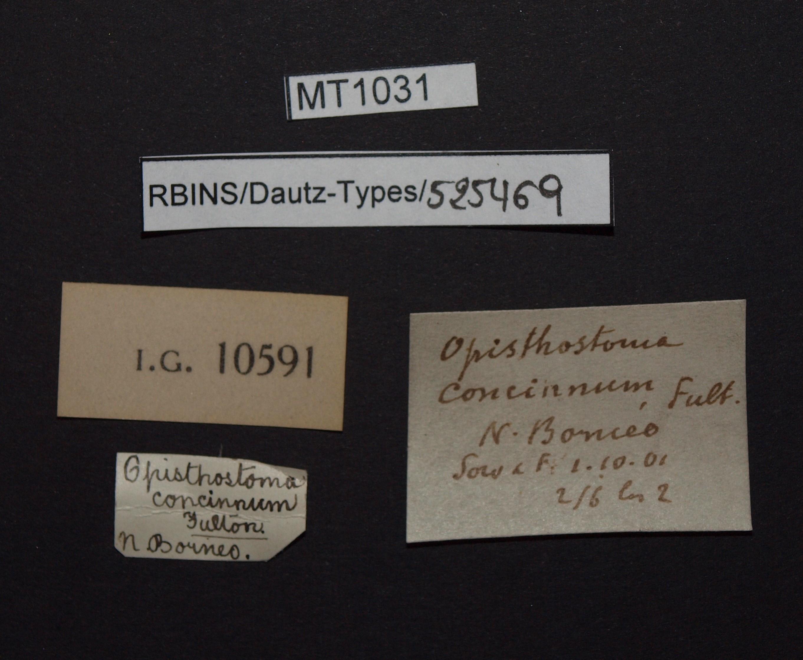 BE-RBINS-INV MT 1031 Opisthostoma (Geothauma) concinnum pt Lb.jpg