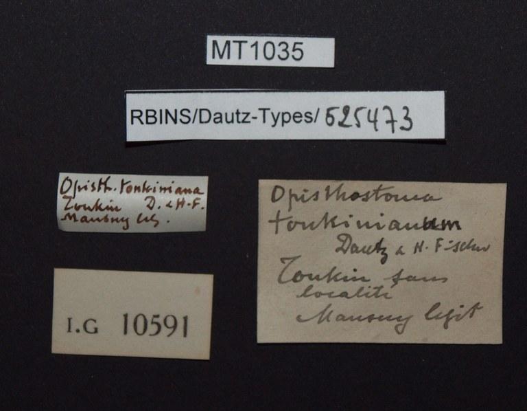 BE-RBINS-INV PARATYPE MT 1035 Opisthostoma tonkinianum LABELS.jpg