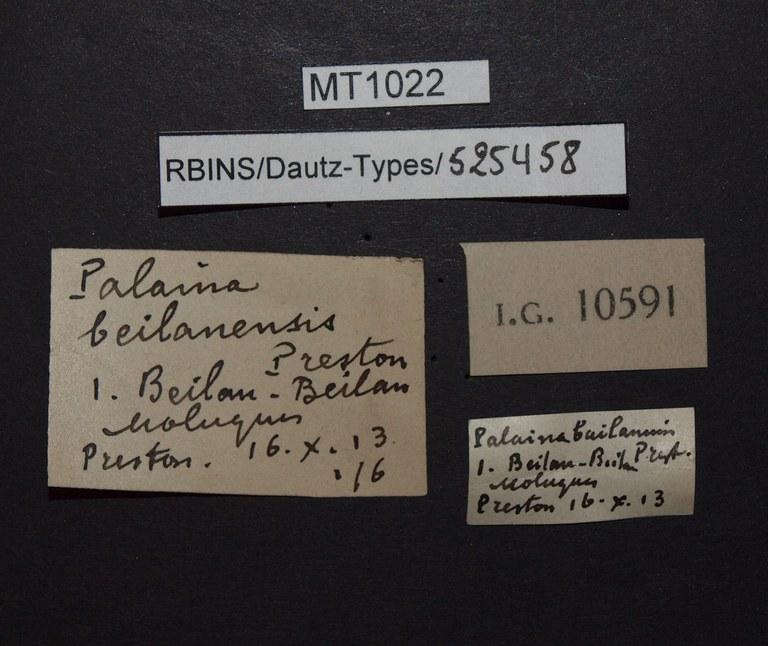 BE-RBINS-INV PARATYPE MT 1022 Palaina beilanensis LABELS.jpg