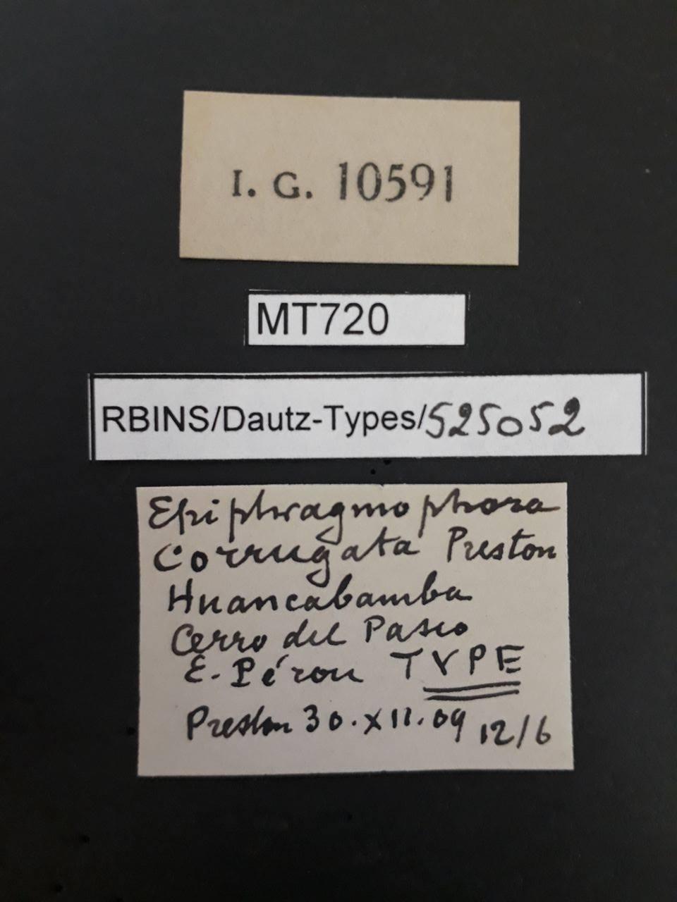 BE-RBINS-INV MT 720 Epiphragmophora corrugata t Lb.jpg