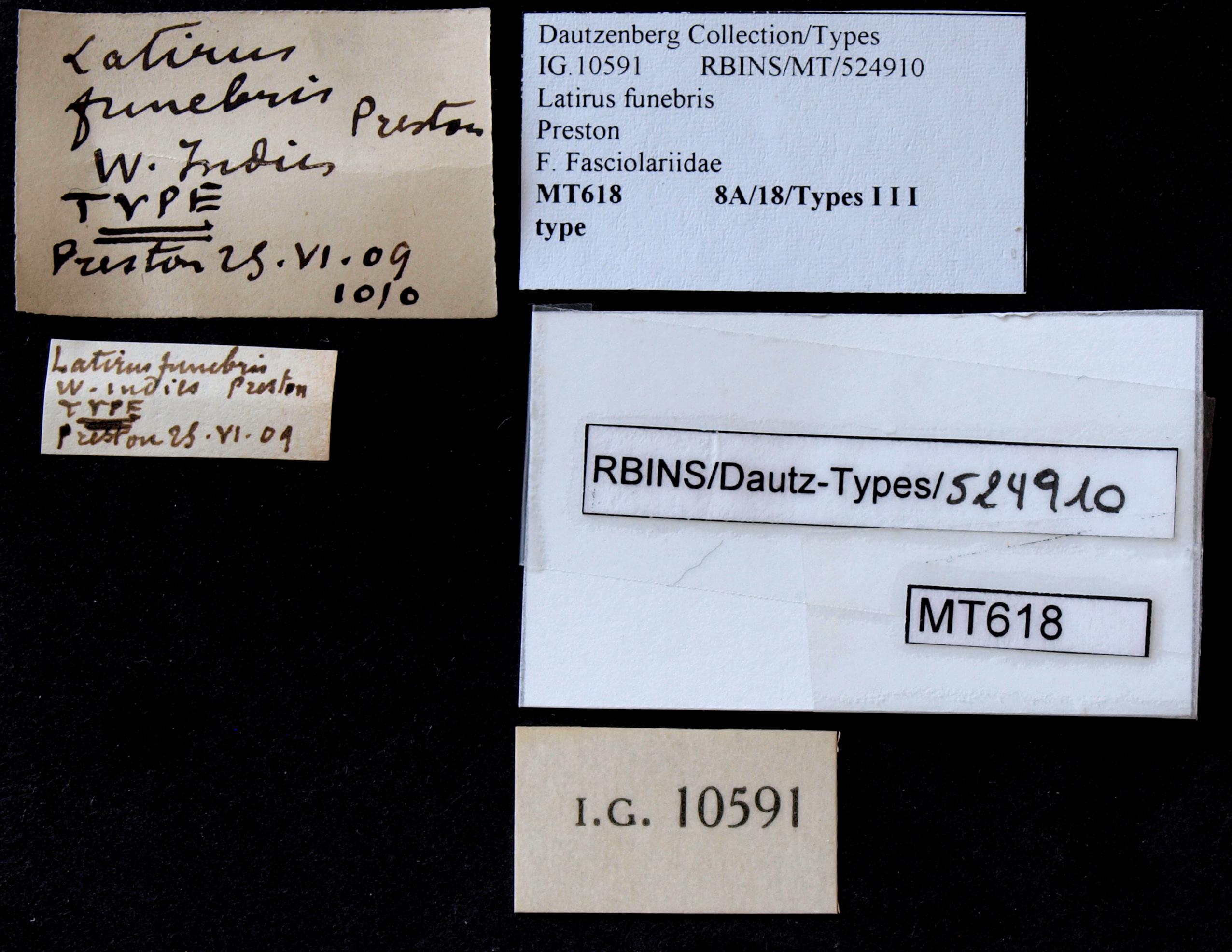 BE-RBINS-INV MT 618 Latirus funebris Type Lb.jpg
