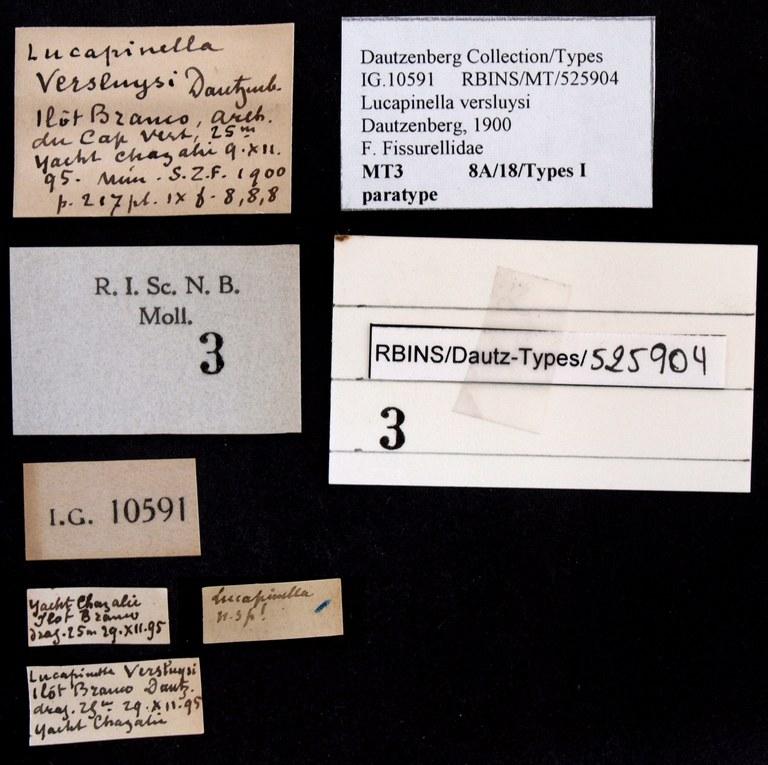 BE-RBINS-INV PARATYPE MT 3 Lucapinella versluysi LABELS.jpg