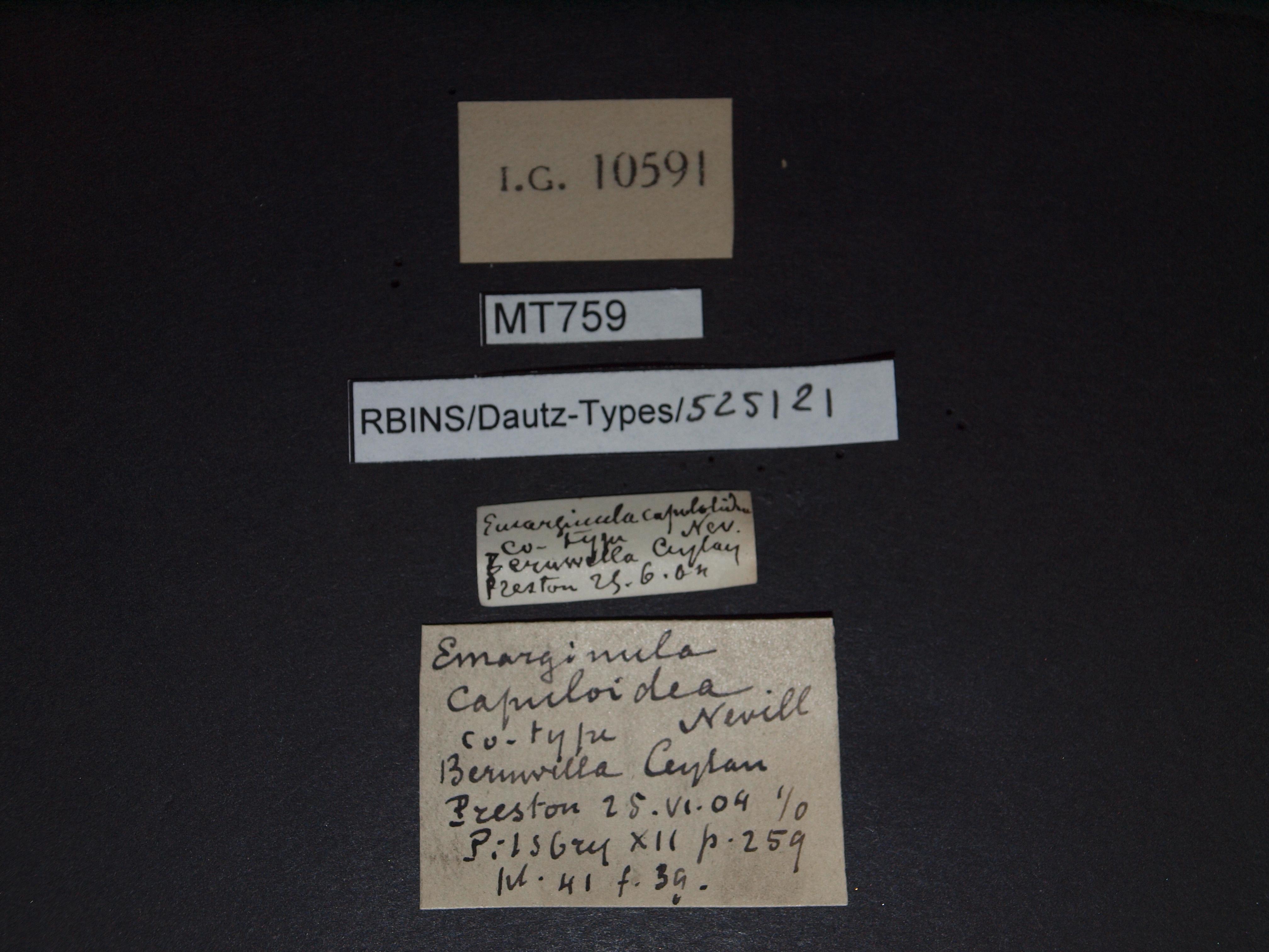 BE-RBINS-INV MT 759 Emarginula capuloidea pt Lb.jpg