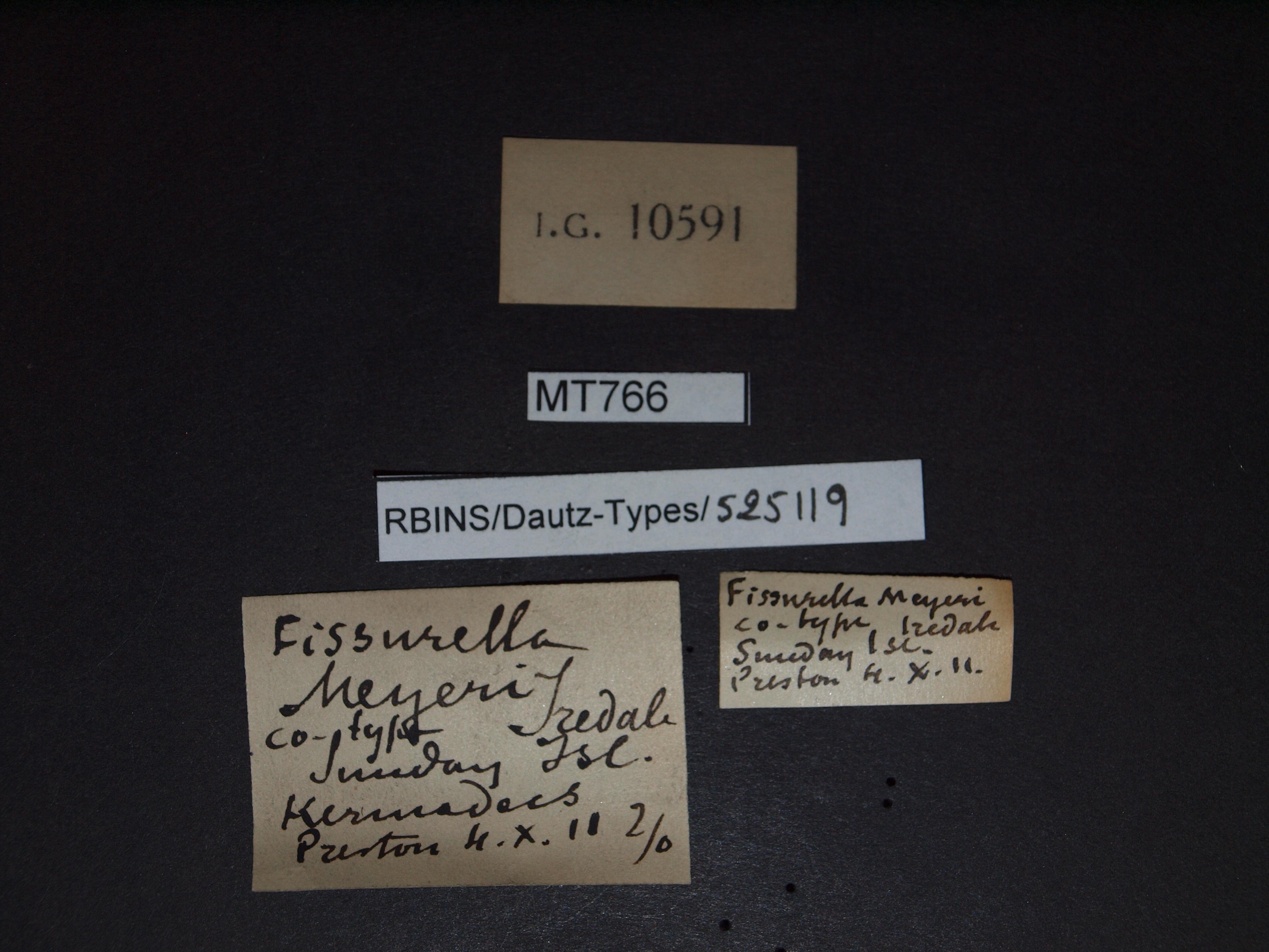BE-RBINS-INV MT 766 Fissurella meyeri pt Lb.jpg