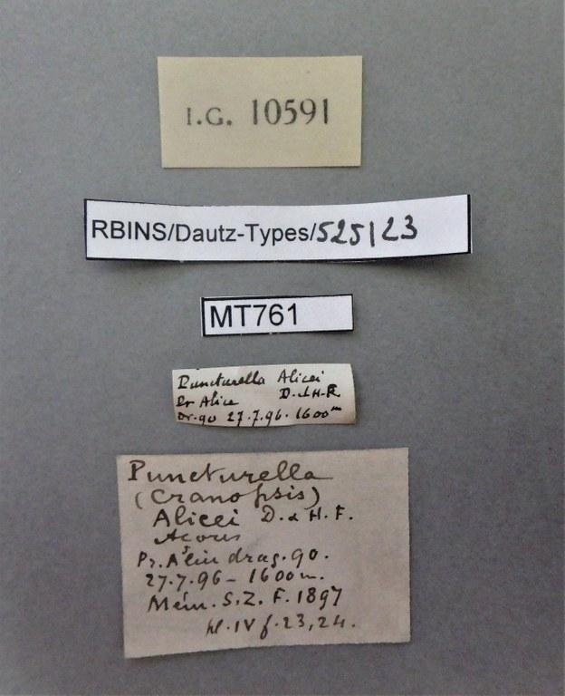 BE-RBINS-INV PARATYPE MT 761 Puncturella (Cranopsis) alicei LABELS.jpg