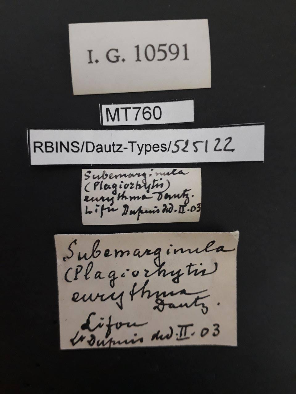 BE-RBINS-INV MT 760 Subemarginula (Plagiorhytis) eurythma pt Lb.jpg