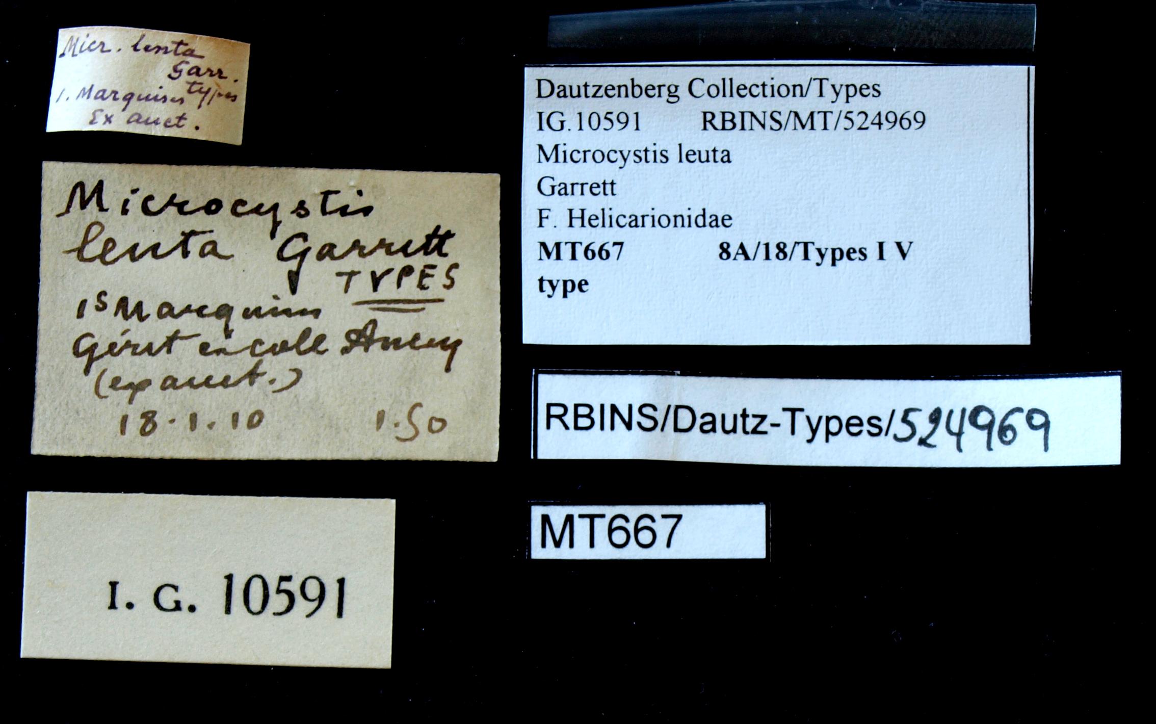 BE-RBINS-INV TYPE MT 667 Microcystis lenta LABELS.jpg