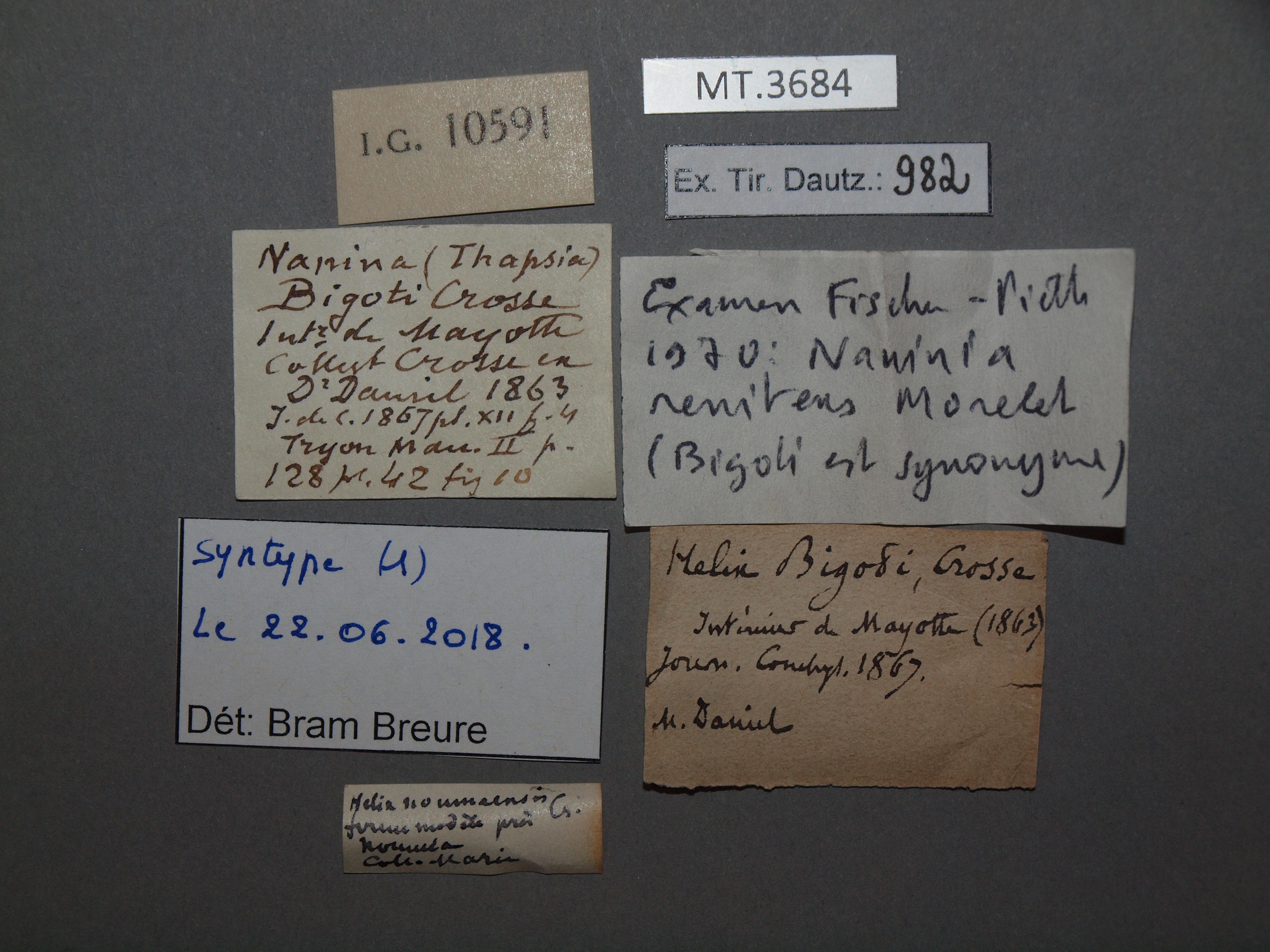 BE-RBINS-INV MT.3684 Helix bigotti st Lb.jpg