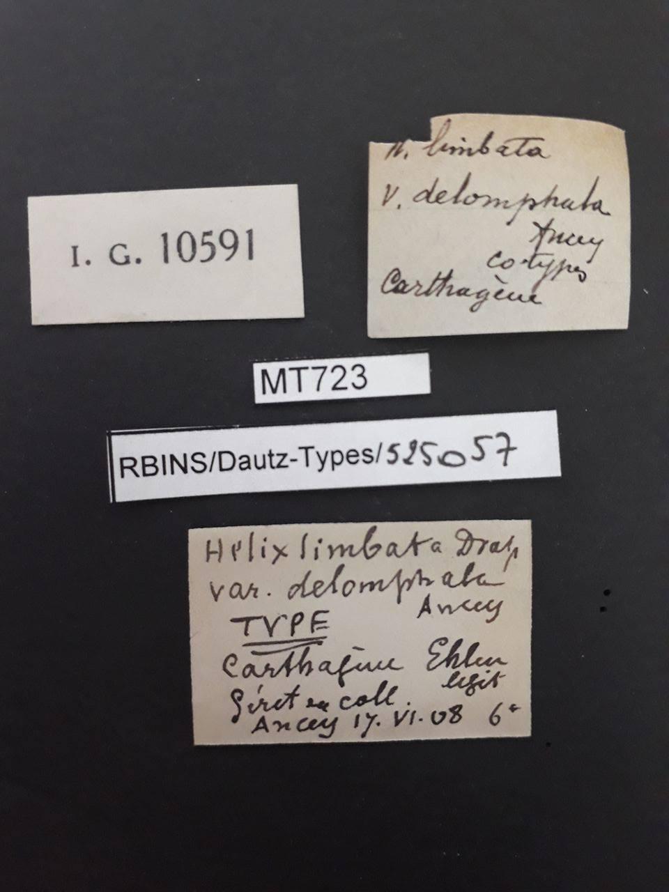 BE-RBINS-INV COTYPE MT 723 Helix (Fruticicola) limbata var. delomphala LABELS.jpg
