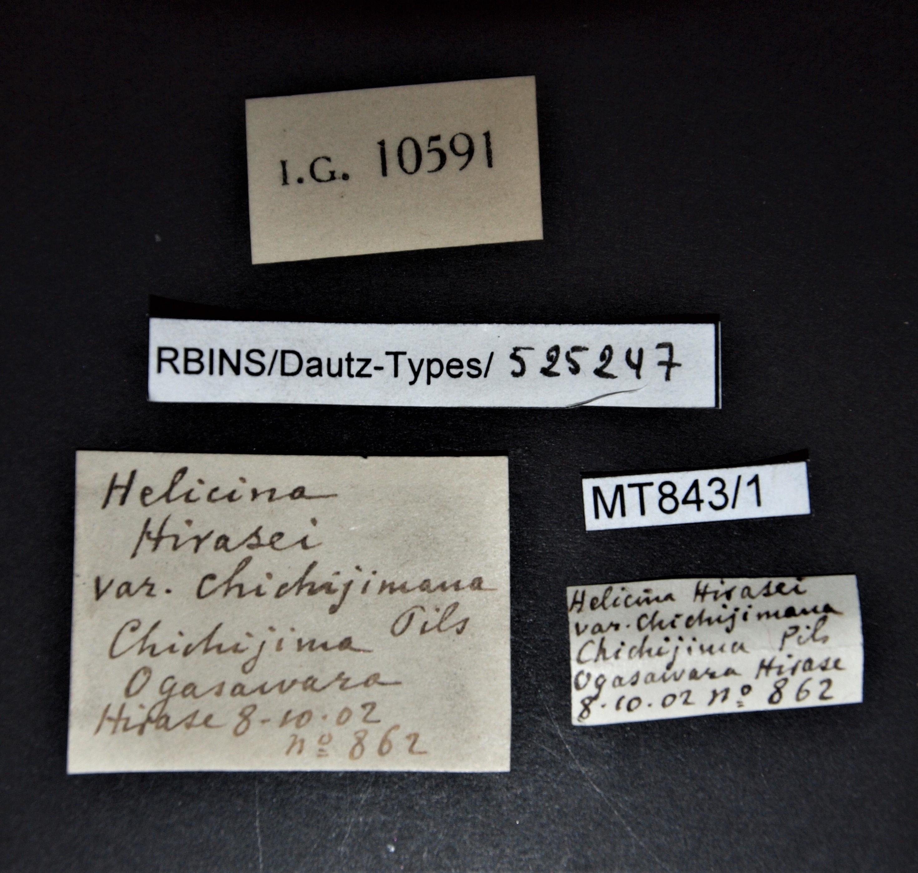 BE-RBINS-INV MT.843/1 Helicina hirasei var. chichijimana pt Lb.jpg