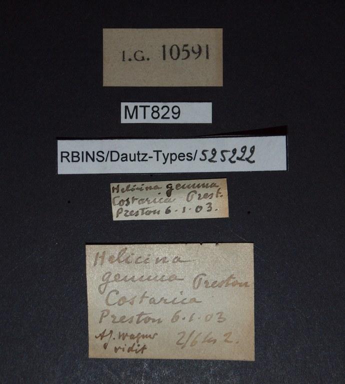 BE-RBINS-INV PARATYPE MT 829 Helicina (Gemma) gemma LABELS.jpg