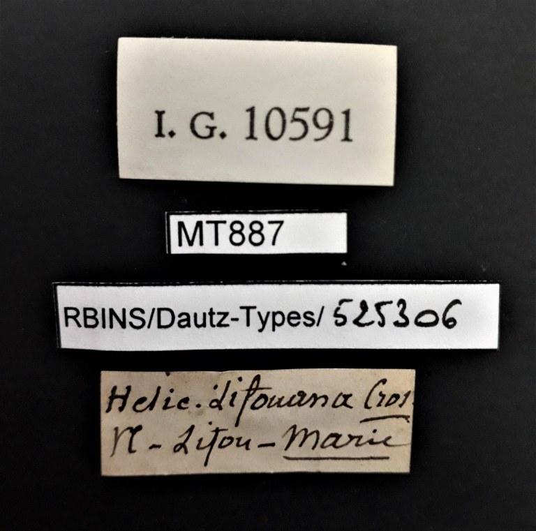 BE-RBINS-INV PARATYPE MT 887 Helicina lifouana LABELS.jpg